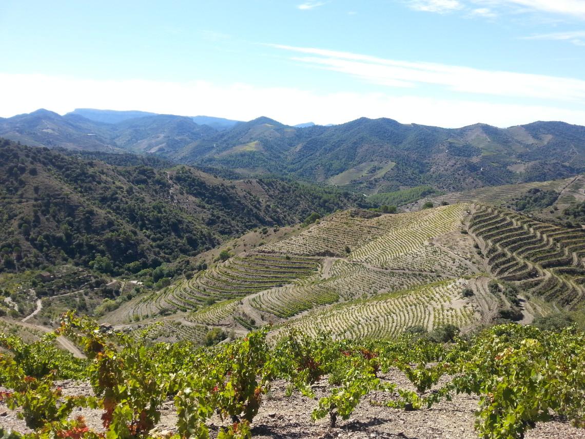 Winnica Vall Llach