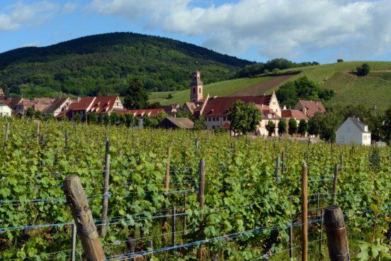 Winnice wokół miasteczka Riquewihr w którym znajduje się Domaine Engel © Pug Girl/Flickr